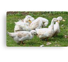 Teenage Ducks Canvas Print