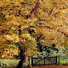 Autumn's gateway by Sue Purveur