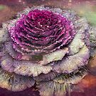 Winter Flowers Series - A Rose of Kale by Marilyn Cornwell