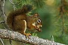 LATE AFTERNOON SNACK by Sandy Stewart
