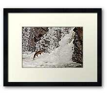 CHINOOK SALMON Framed Print