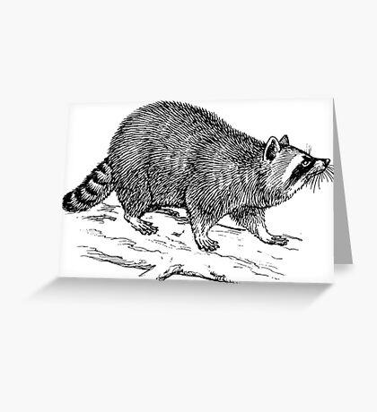 Raccoon drawing Greeting Card