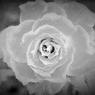 Elegance in tones of grey by ♥⊱ B. Randi Bailey