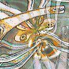 Canobulator by Peter Stratton