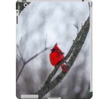 Cardinal In A Snow Storm iPad Case/Skin