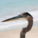 Beached Heron by Bob Hardy