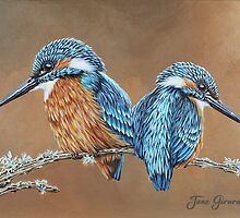 Kingfishers by Jane Girardot