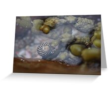 Seaside; Sea Snail Greeting Card