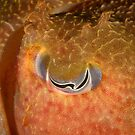 Eye of Giant Cuttlefish - Sepia apama by Andrew Trevor-Jones