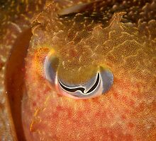 Eye of Giant Cuttlefish - Sepia apama by Andrew Trevor-Jones