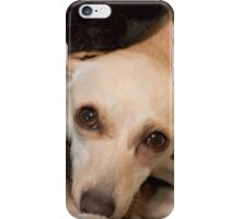 Chiweenie  Miracle Rescue iPhone Case/Skin