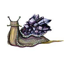 Amethyst Gastropod by Tessa Roever