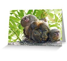 Monkeys (very small !) 1 (c)(t)  Olao-Olavia / Okaio Créations Greeting Card