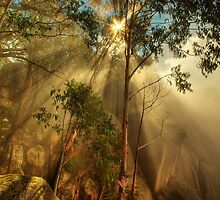 Clearing mist, Mount Buffalo by Kevin McGennan