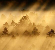 28.6.2014: Sweet Summer Morning by Petri Volanen