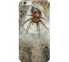 Tegeneria Spider in Web iPhone Case/Skin