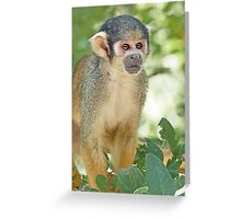 Monkeys  2 (c)(h)   Olao-Olavia / Okaio Créations Greeting Card