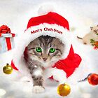 Three Christmas Kittens by Chris Armytage™