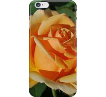Apricot Beauty iPhone Case/Skin