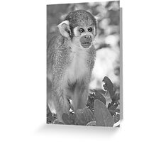 Monkeys  (n&b)(h) Olao-Olavia / Okaio Créations Greeting Card