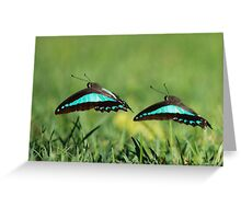 Dancing in unison Greeting Card