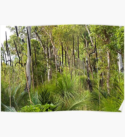 Grass tree spears Poster