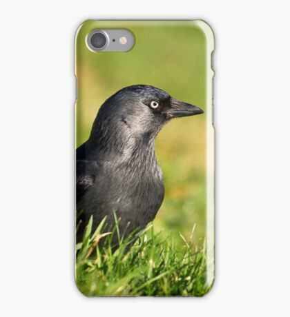 Jackdaw in grass II iPhone Case/Skin