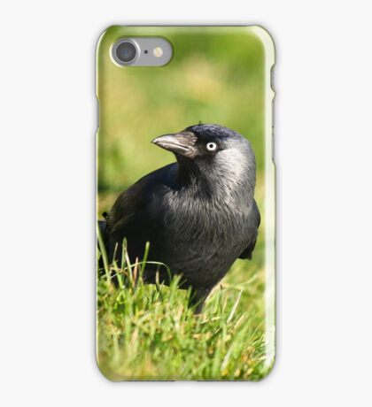 Jackdaw in grass III iPhone Case/Skin
