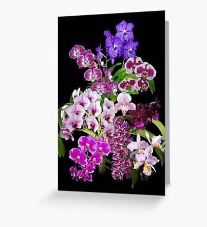 Orchids - Cool and Restful Colors! Greeting Card