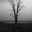 Foggy Morning by Joel Bramley