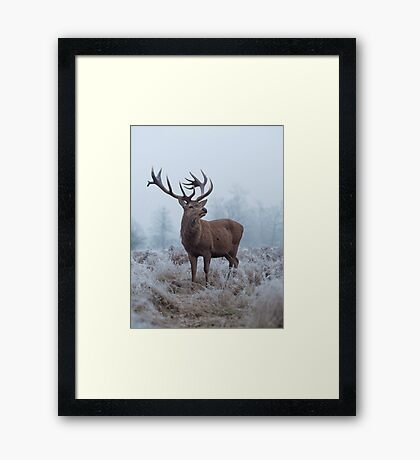Monarch in a field of white Framed Print