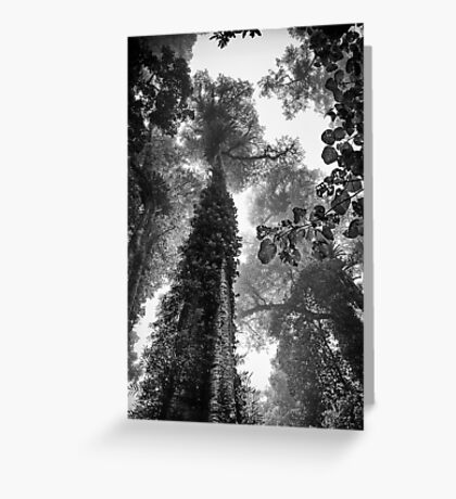 Look up - and up and up! Greeting Card
