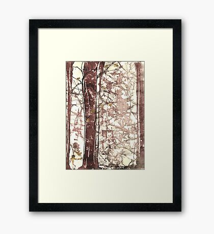 Redwood Forest 1 Framed Print