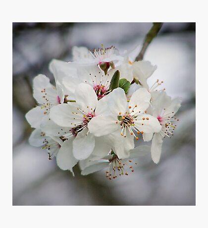 Cherry Blossom Zen Yoga Photographic Print