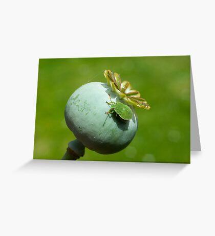 Common Green Shieldbug 4th instar nymph Greeting Card