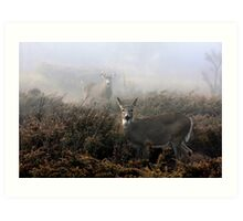 The rut is on! - White-tailed Buck and doe Art Print