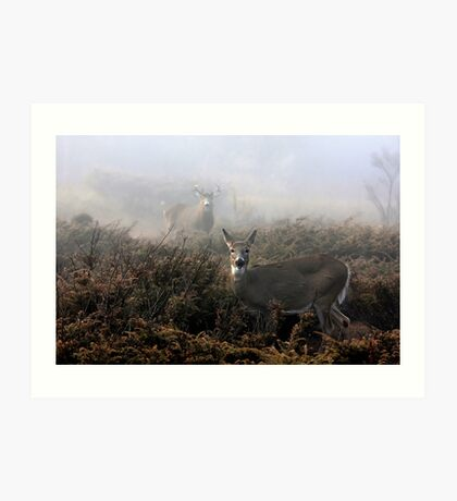 The rut is on! - White-tailed deer  Art Print