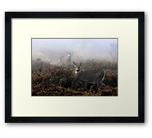 The rut is on! - White-tailed Buck and doe Framed Print