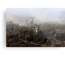 The rut is on! - White-tailed Buck and doe Metal Print
