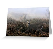 The rut is on! - White-tailed Doe and Buck Greeting Card