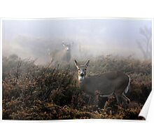 The rut is on! - White-tailed Buck and doe Poster