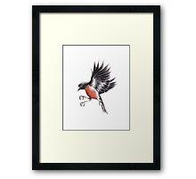 Flame Robin Framed Print