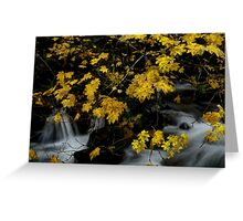 Vine Maple and Water Greeting Card