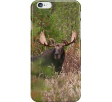 Bull Moose in Algonquin Park, Canada iPhone Case/Skin