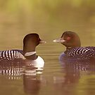 """Ahh…a-loon at last"" - Common Loon by Jim Cumming"
