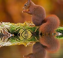 Red Squirrel in autumn colours by Natuuraandemuur