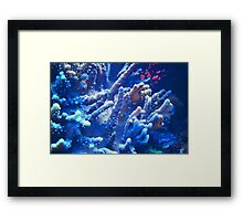 Under the sea III Framed Print