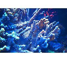 Under the sea III Photographic Print