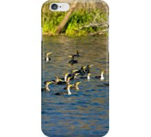 Cormorants Galore iPhone Case/Skin