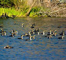 Cormorants Galore by imagetj
